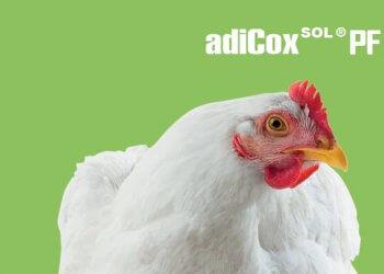 adicox sol adifeed